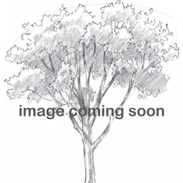 981e1d87-188d-4441-83e9-1933ea6f2c0e-image-coming-soon.jpg