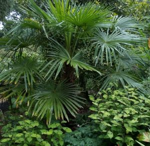 Who Needs The Tropics With All Insects When You Can Create Your Own Tropical Garden