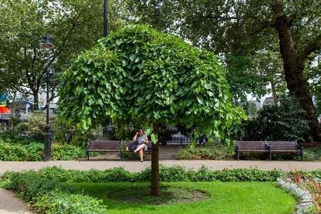 Weeping white mulberry