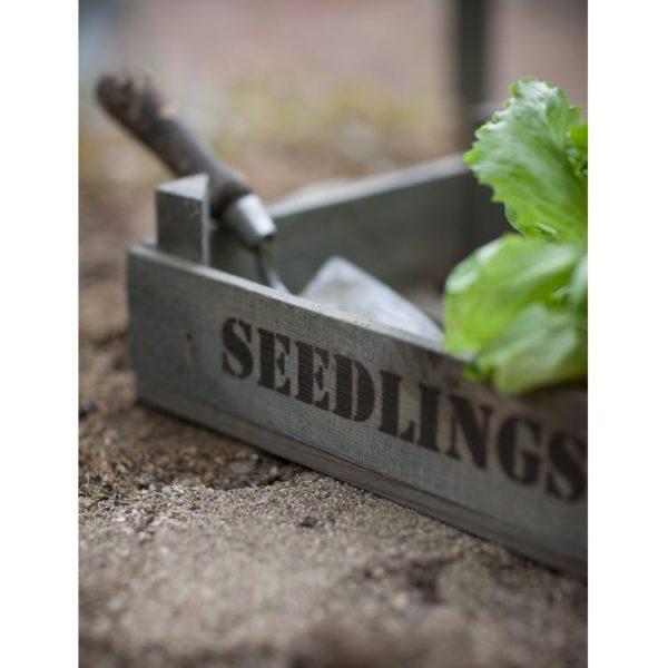 Seedlings Tray